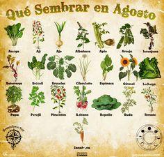 Que sembrar en abril / What to plant in April Organic Farming, Organic Gardening, Gardening Tips, Eco Garden, Garden Deco, Edible Garden, Urban Farmer, Green Life, Growing Vegetables