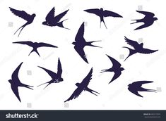 Find Swallow Bird Silhouette Set stock images in HD and millions of other royalty-free stock photos, illustrations and vectors in the Shutterstock collection. Bird Silhouette Tattoos, Animal Silhouette, Silhouette Vector, Bird Tattoos, Tatoos, Swallow Tattoo, Swallow Bird, Bird Drawings, Doodle Drawings