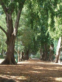 City Botanic Gardens - Brisbane, Queensland