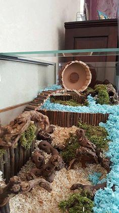 Small Pet Cages Diy Animals Ideas For 2019 Cool Hamster Cages, Diy Hamster Toys, Hamster Life, Baby Hamster, Hamster House, Hamster Stuff, Hamster Tank, Hamster Habitat, Hedgehog Habitat