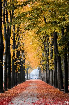 Autumn in Monza, Italy. Beautiful Roads, Beautiful Places, Tree Tunnel, Pretty Pictures, The Great Outdoors, Reggio, Paths, Scenery, Places To Visit