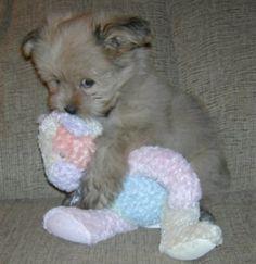 そして、この子犬は、彼の小さな子犬昼寝から目を覚ますしたいと家庭のすべての方法を叫んだしませんでした! | 20 Puppies Cuddling With Their Stuffed Animals During Nap Time