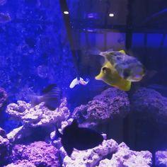 75 Gallon Aquarium Ideas (Fish Guide) Video Credit: 75 Gallon Aquarium Ideas on IG 75 Gallon Aquarium, Reef Aquarium, Aquarium Fish Tank, Saltwater Fish Tanks, Saltwater Aquarium, Best Aquarium Filter, Tropical Fish, Colorful Fish, Marine Fish Tanks