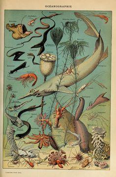 Adolphe_Millot_oceanographie-pour_tous