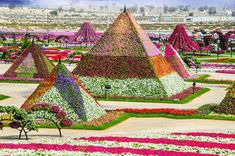 The Dubai Miracle Garden is unique in that it was essentially built on a desert. Home to 150 million flowers and situated adjacent to Dubailand, Dubai Miracle Garden is the. Unique Gardens, Amazing Gardens, Beautiful Gardens, Beautiful Flowers, Beautiful Pictures, Topiary Garden, Garden Art, Garden Tips, Dubai Miracle Garden