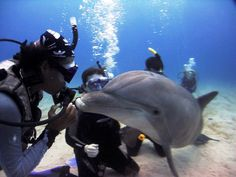 Why Scuba Diving Is A Worthwhile Pursuit