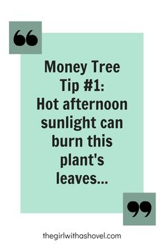 Did you know that this tree can only withstand warm sunlight temperatures if it has been VERY slowly acclimated?! Check out this, and other tips for your money tree here! House Plants Decor, Plant Decor, Money Tree Plant Care, Trees To Plant, Plant Leaves, All About Plants, Apartment Plants, Lower Lights, Plant Guide