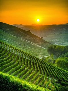 Italy's Vineyards at Expression Photography