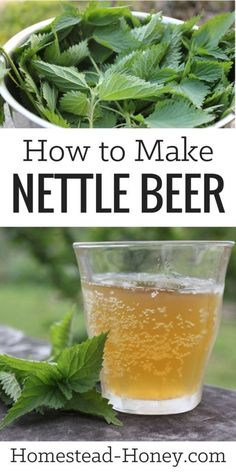 Homebrewing projects Tangy and mineral rich, this wild harvested and fermented nettle beer recipe is a delicious drink, reminiscent of hard cider. Learn how to make it at Homestead Honey. Kombucha, Yummy Drinks, Healthy Drinks, Healthy Recipes, Healthy Food, Beer Brewing, Home Brewing, Fermentation Recipes, Beer Recipes