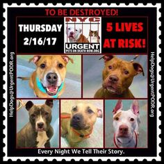 5 REALLY PRECIOUS PETS 2B DESTROYED 02/16/17. TOMORROW. PLEASE READ THEIR STORIES. MAYBE U CAN HELP?..EVERY NIGHT WE TELL THEIR STORIES.
