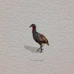 Day 188 : ń Fisant vir @barnievanstraten - gelukkige verjaarsdag! 17 x 21 mm. #365paintingsforants #miniature #watercolour #fisant