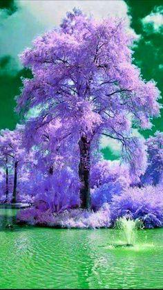 - it's mindblowing - foto - wisteria Beautiful Nature Wallpaper, Beautiful Landscapes, Beautiful Gardens, Beautiful Images, Beautiful Flowers, Landscape Photos, Landscape Photography, Nature Photography, Unique Trees