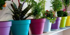 What Your Houseplants Are Saying About You Are you a begonia or a ficus? #HomeAccents #weloveplants