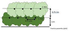 Volně rostoucí – bezúdržbový – částečně jedlý – živý plot – Ořeška Line Chart, Simple Lines