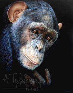 Animals And Pets, Cute Animals, Wildlife Paintings, Wild Ones, Animal Kingdom, Wonders Of The World, Photos, Pictures, Creatures