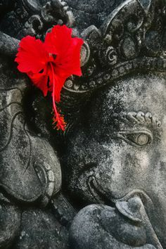 Ganesh and a Hibiscus
