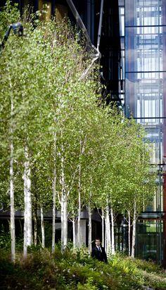 Birch and Rough Stuff in an urban setting