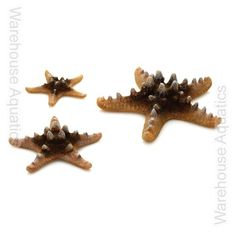 BiOrb Aquarium Ornament - Natural Sea Stars