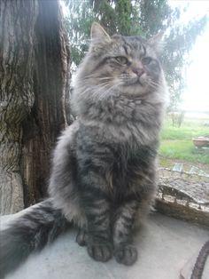 Cute cat!!!!