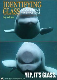 http://meme.eiremedia.netdna-cdn.com/meme/identifying-glass-by-whale.jpg