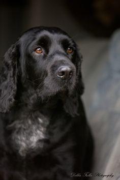 looks like my dog , Jack