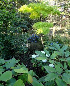 perigo jardim: O jardim de Hansen-Winter ... parte 1