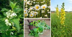 10 léčivých rostlin které si můžete nasbírat v měsíci červnu