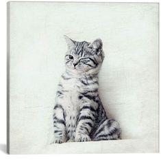 icanvasart Cat Wink By Nadia Attura