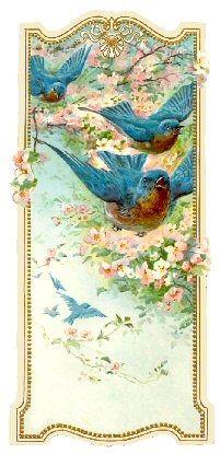 blue birds                                                                                                                                                                                 More