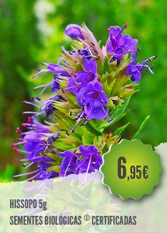 Hissopo Biológico - O Hissopo é uma planta aromática e medicinal, muito utilizada contra as infecções do sistema respiratório (tosse, asma e bronquites), dores musculares e indigestão.