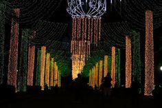O Blog da Pam Pam: Nosso primeiro Natal