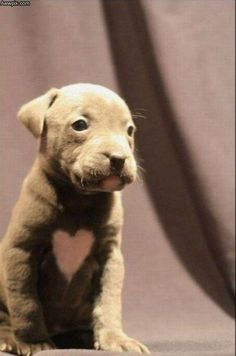 This puppy was meant to loved! Just look at him, he's got love written all over him!!!