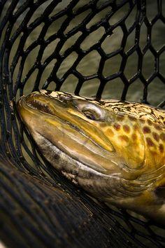 BGP_FISH (8).jpg | Bryan Gregson Photography