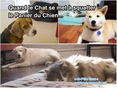 On pense souvent que le chien est le plus fort... ...mais en fait il se pourrait bien que le chat fasse la loi ! Voici 16 images qui prouvent que les chats sont décidément de sacré petits malins !  Découvrez l'astuce ici : http://www.comment-economiser.fr/quand-le-chat-se-met-a-squatter-le-panier-du-chien.html?utm_content=buffer4d9c4&utm_medium=social&utm_source=pinterest.com&utm_campaign=buffer