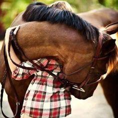 Ahhhhhh, best hug Everrrrrrr!!! ;o)