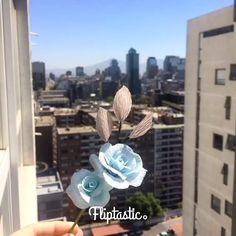 Paper Roses, 3 Months, This Is Us, Bird, Adventure, Amazing, Plants, Handmade, Instagram