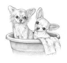 Sketch of two chihuahuas - long hair and short hair