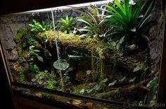 - Page 12 - Dendroboard Leopard Gecko Cage, Leopard Gecko Terrarium, Bartagamen Terrarium, Tree Frog Terrarium, Reptile Habitat, Reptile Room, Reptile Cage, Vivarium, Aquarium Design
