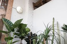 COS | Things | CONSERVATORY ARCHIVES