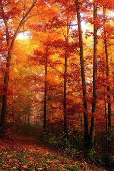 Foggy Path With Fall Foliage...;by Jeff Holbrook