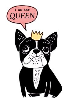 """I am the QUEEN"", French Bulldog Illustration �"