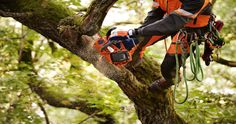 Highly efficient electric cordless chain saws, pole saws, trimmers, leaf blowers and hedge trimmers driven by powerful battery pack.