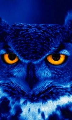 Owl says keep your eyes and ears open and your mouth closed ............