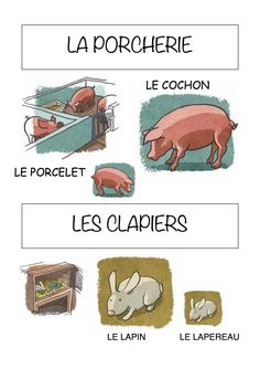 Vocabulaire de la ferme Imagier simple pour la maternelle : la porcherie et les clapiers French Teacher, Teaching French, How To Speak French, Learn French, French Practice, Ontario Curriculum, Farm Animal Crafts, Teaching Schools, French Lessons