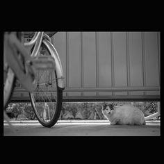 https://flic.kr/p/thZjhX | Totoro May 2015  #cat #smallcats #totoro #blackandwhitephotography