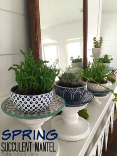 Spring bright succul