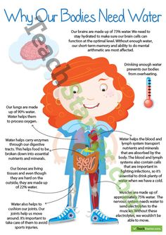 Why Our Bodies Need Water Poster Teaching Resource