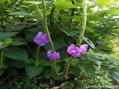 Plantas ornamentales de MundoForestal.com