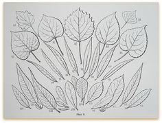 leaf id