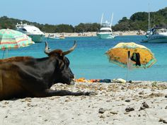 Corsica - spiaggia della Rondinara